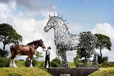 Baron Heavy Horse Displays a larger version of this image in a new browser window