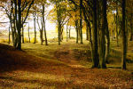Cathkin Braes - Autumn Trees Displays a larger version of this image in a new browser window