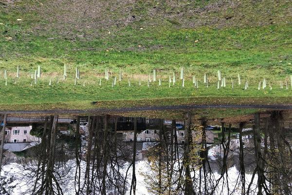 MGSDP Glasgow SE Woodland Walkway 1