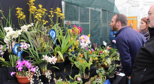 orchid fair 2017 poster