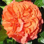 14. Orangerie (1)
